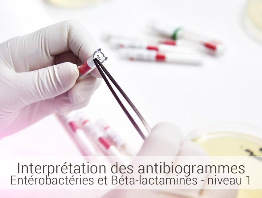 interprétation des antibiogrammes